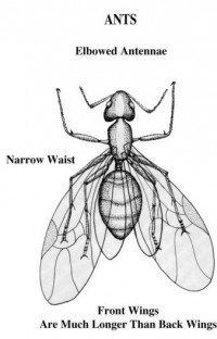 Insect ID | Pest Identification | Bug Pictures Charlotte NC